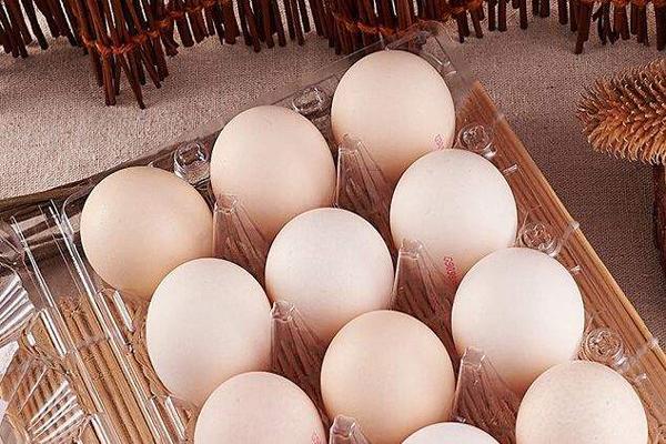鸡蛋期货如何开户